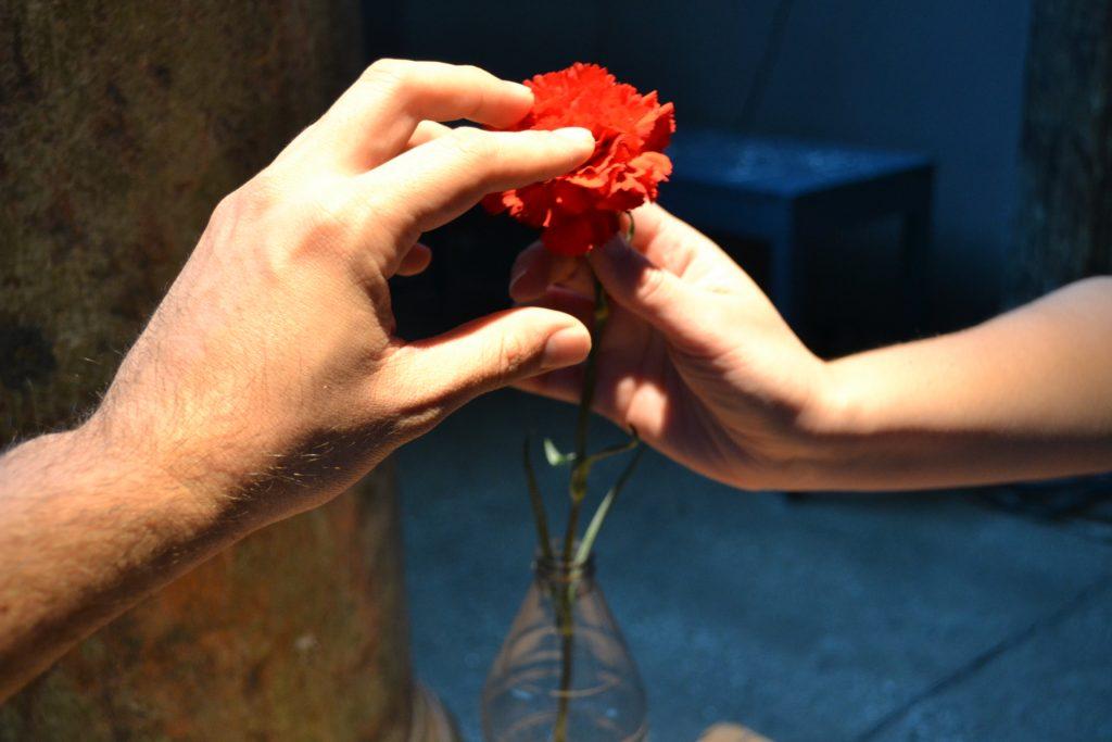 Foto colorida de duas mãos tocam um cravo vermelho . Enquanto uma segura o cabo a outra toca as pétalas.