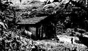 Foto em preto e branco de um pequeno casebre feito de pau a pique em meio a mata. Vemos que é uma casa pequena, de poucos cômodos, com uma porta e uma janela na fachada e uma janela na lateral.